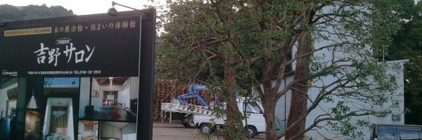 ヒイラギ古木の移動